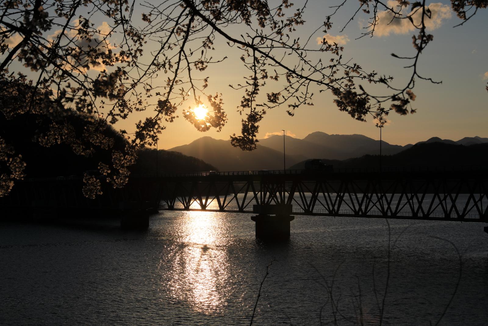 釜房ダムの桜夕景