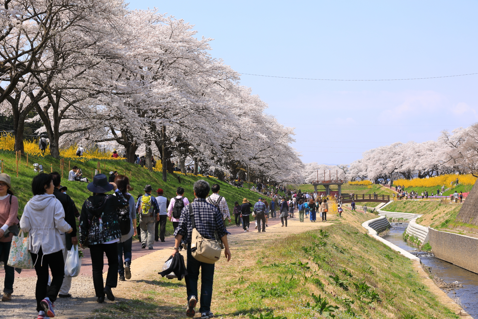 白石川堤一目千本桜 遊歩道