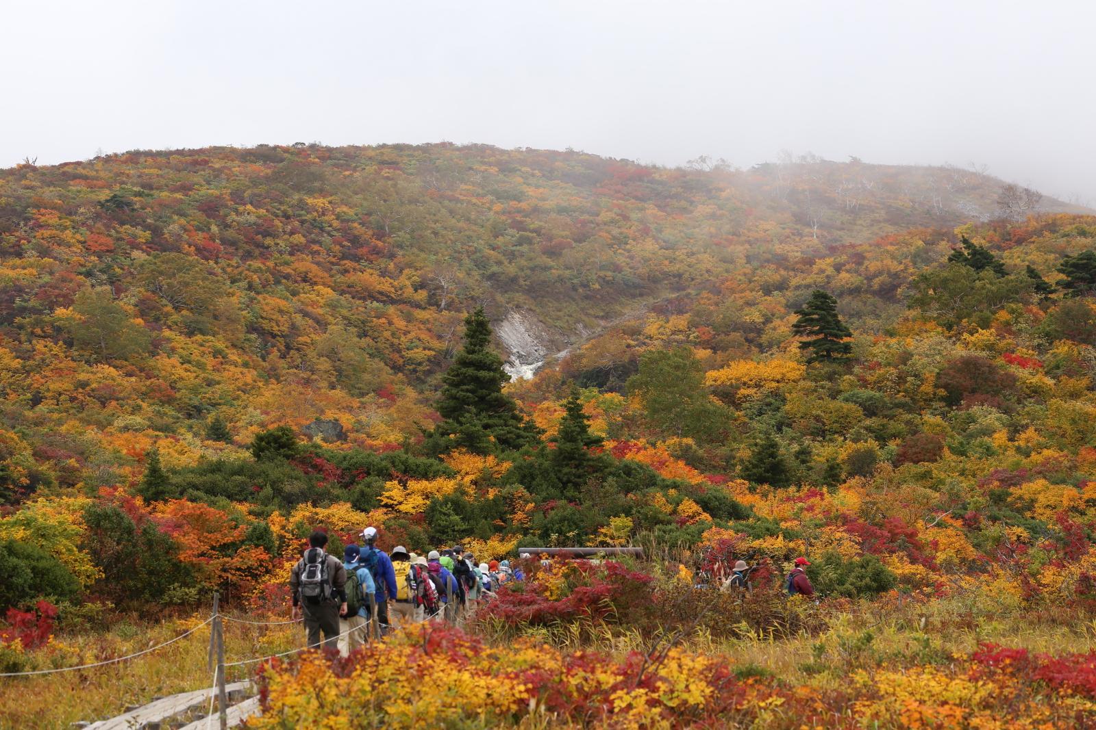 霧の栗駒山