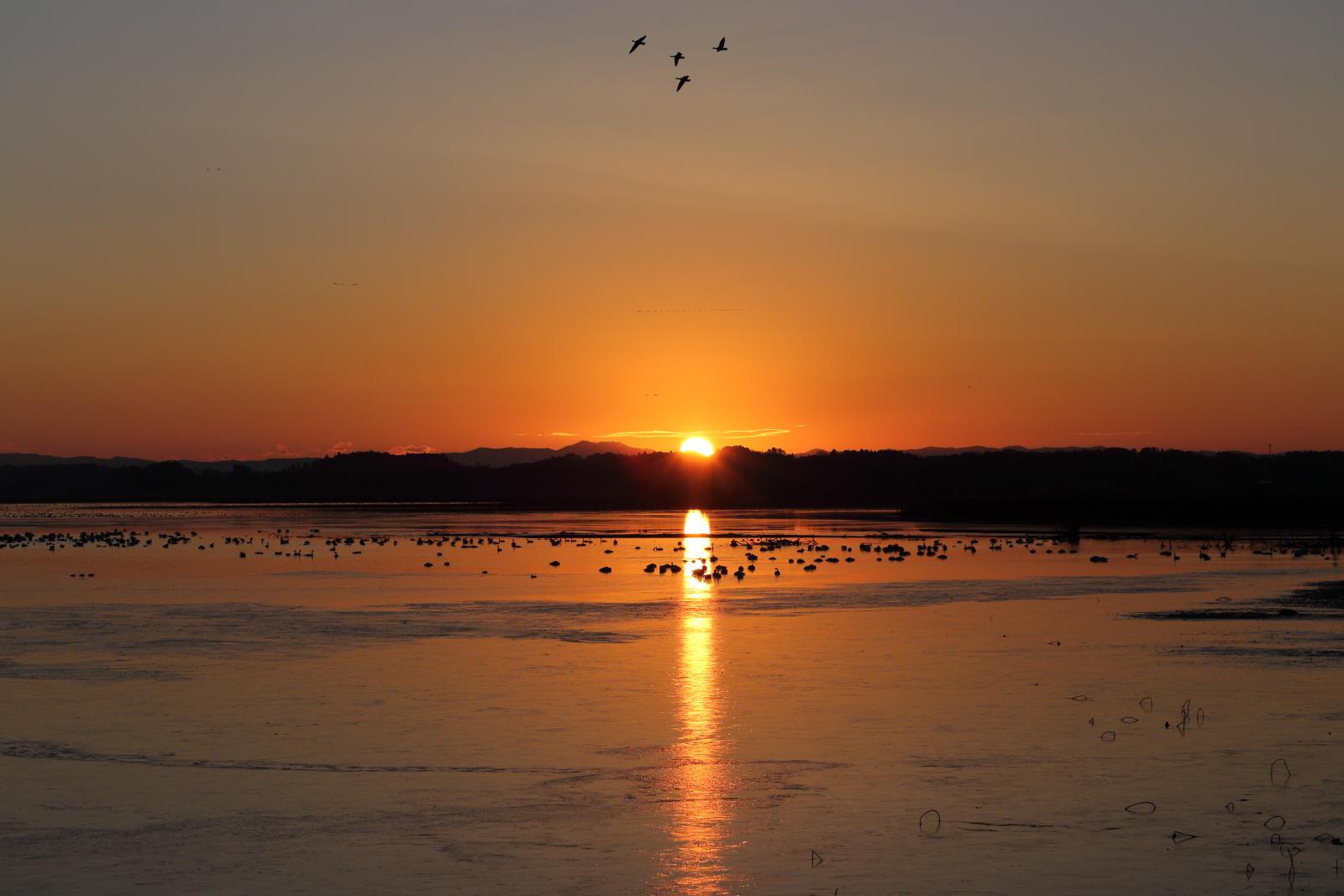 伊豆沼へ渡り鳥を見に